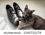 The Kitten Plays With The Laces ...