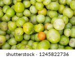 green and red tomato | Shutterstock . vector #1245822736