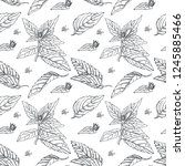 floral seamless pattern with...   Shutterstock . vector #1245885466