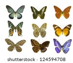 butterfly on white | Shutterstock . vector #124594708