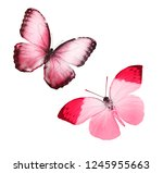 Stock photo two color flying isolated on white background 1245955663