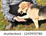 happy dog to snuggle to the... | Shutterstock . vector #1245955780
