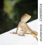 garden lizard. these changeable ... | Shutterstock . vector #1246000516