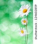 Daisy Flowers On Green...