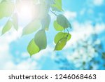 background from the leaves of... | Shutterstock . vector #1246068463