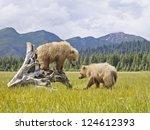 Two Bears In Alaska Enjoying...