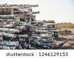 timber industry. felled trunks... | Shutterstock . vector #1246129153