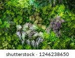 green leaves with vegetation on ... | Shutterstock . vector #1246238650