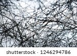 black web on white background.... | Shutterstock . vector #1246294786