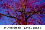 old big tree decorated with... | Shutterstock . vector #1246310656