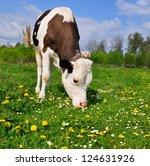 the calf on a summer pasture   Shutterstock . vector #124631926