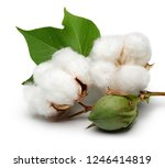 cotton with leaves isolated on... | Shutterstock . vector #1246414819