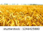 wheat ears agriculture field... | Shutterstock . vector #1246425880