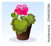 pink summer geranium vector...   Shutterstock .eps vector #1246434286