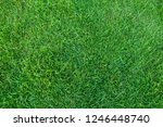 green grass texture for... | Shutterstock . vector #1246448740