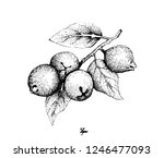 tropical fruits  illustration... | Shutterstock .eps vector #1246477093