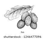 fresh fruits  illustration of... | Shutterstock .eps vector #1246477096