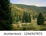 hiking through the schwarzwald...   Shutterstock . vector #1246567873