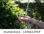 water pouring in woman hand... | Shutterstock . vector #1246612969