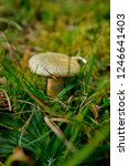 hiking through the schwarzwald...   Shutterstock . vector #1246641403