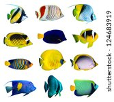 tropical fish collection on... | Shutterstock . vector #124683919
