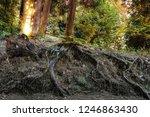 dinosaur skull on the ground in ... | Shutterstock . vector #1246863430