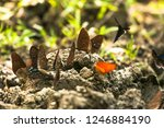 beautiful butterfly in the park. | Shutterstock . vector #1246884190