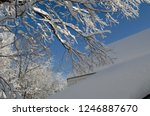 Snow Covered Tree Branches Over ...