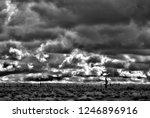 sonora desert in infrared... | Shutterstock . vector #1246896916