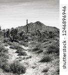 the sonora desert in central... | Shutterstock . vector #1246896946