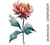 red aster. floral botanical...   Shutterstock . vector #1246910029