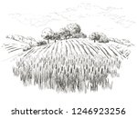 rural landscape field wheat ... | Shutterstock .eps vector #1246923256