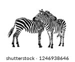 Vector Two  Zebras Standing...