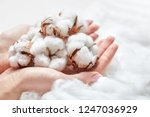 white cotton flowers in the... | Shutterstock . vector #1247036929