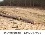 environment  nature and... | Shutterstock . vector #1247047939
