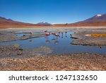 sud lipez   flamingos... | Shutterstock . vector #1247132650