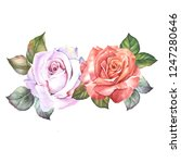 red and white roses with leaves.... | Shutterstock . vector #1247280646
