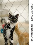 cat in shelter | Shutterstock . vector #1247287360