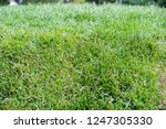 urban photography  a lawn is an ... | Shutterstock . vector #1247305330
