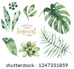 hand drawn watercolor tropical... | Shutterstock . vector #1247331859