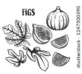 graphic collection of fig... | Shutterstock .eps vector #1247500390