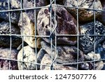 close up outdoor view of a... | Shutterstock . vector #1247507776