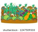 vectot illustration of...   Shutterstock .eps vector #1247509333