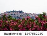 Nerium Oleander Pink Flowers...