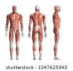 3d rendered medically accurate...   Shutterstock . vector #1247625343
