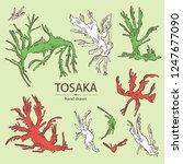 collection of tosaka  laminaria ... | Shutterstock .eps vector #1247677090