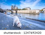 cathedral of notre dame de... | Shutterstock . vector #1247692420