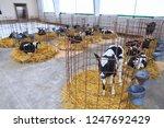nursery on a farm. cute little... | Shutterstock . vector #1247692429