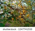 Beautiful Orange Flowers On...