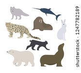 greenland and arctic wild polar ... | Shutterstock .eps vector #1247782189